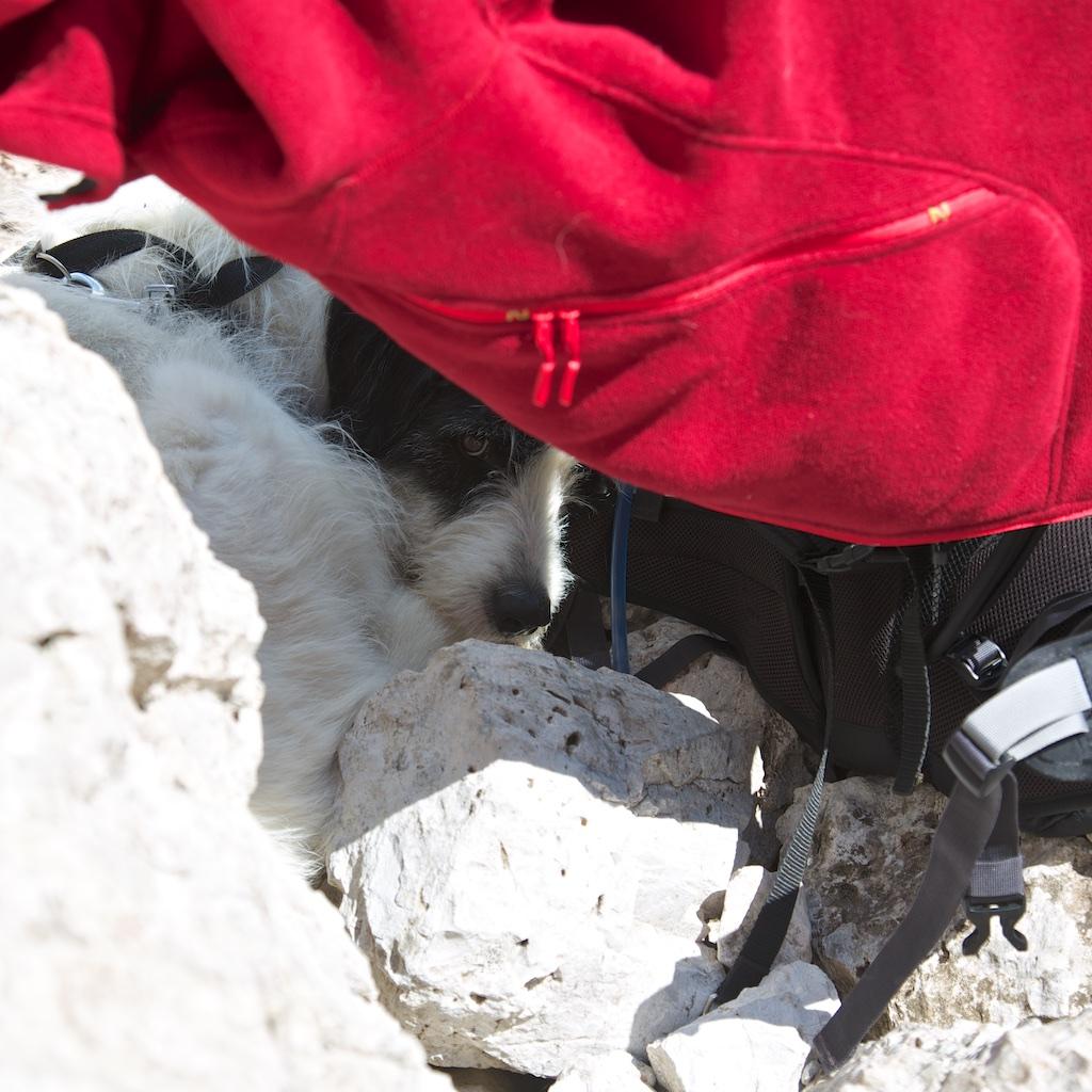 Improvisierter Sonnenschutz für unseren Kletterhund Sam.